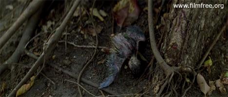 আহত পাখি । দ্য থিন রেড লাইন